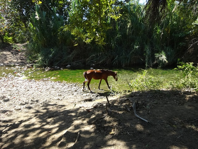 horseback ride from Trinidad, Cuba, Blue Sky and Wine