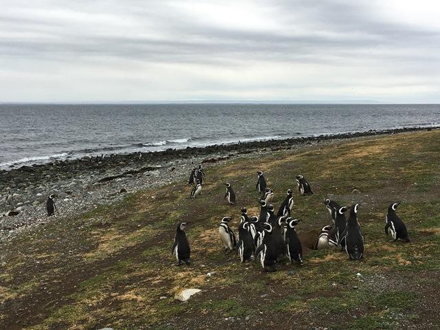 Magdalena Island, Punta Arenas, Chile