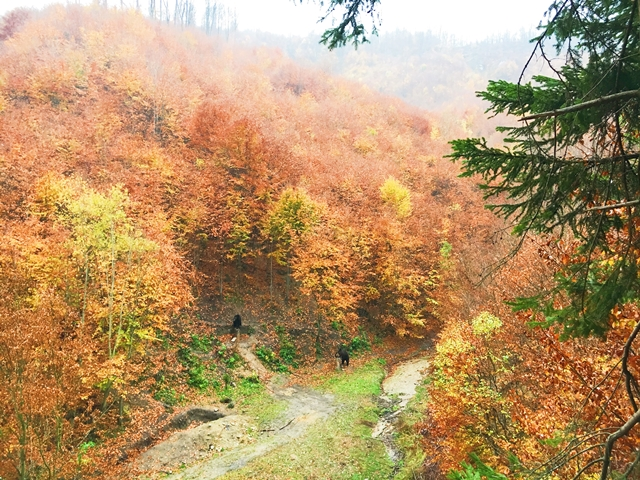 An autumn in Romania – Bear Watching from Brasov