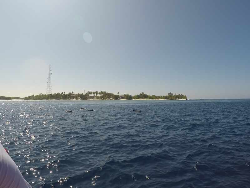 Dolphin watching from Huraa, Maldives, Blue Sky and Wine