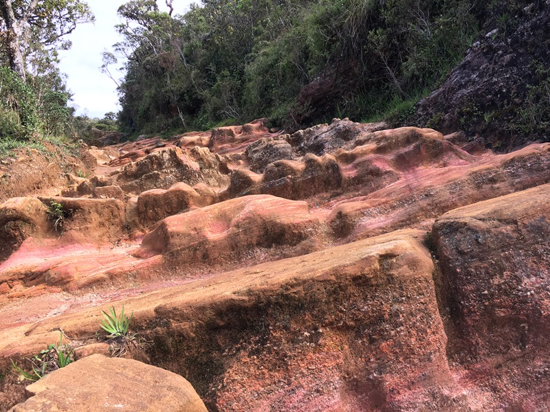 Horton Plains in Nuwara Eliya, Sri Lanka, Blue Sky and Wine