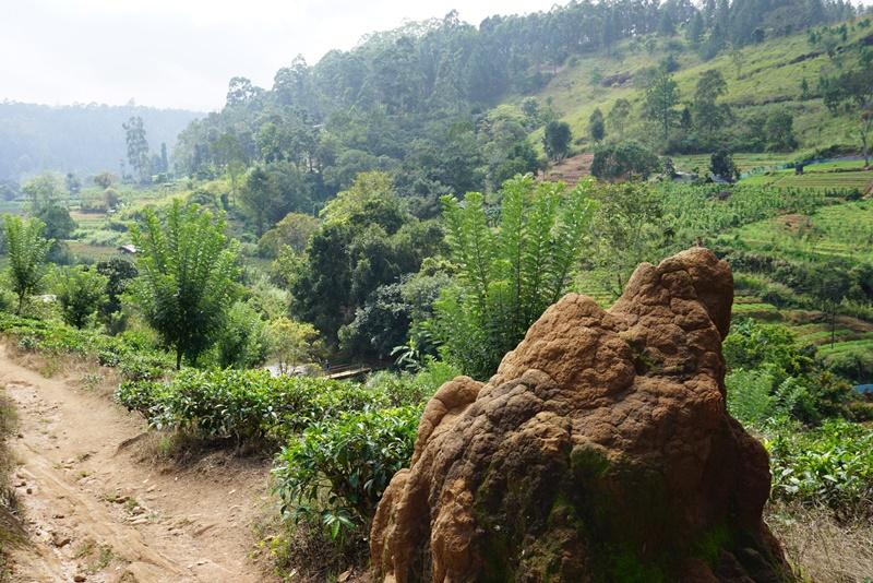 Ella's Rock, Sri Lanka, Blue Sky and Wine