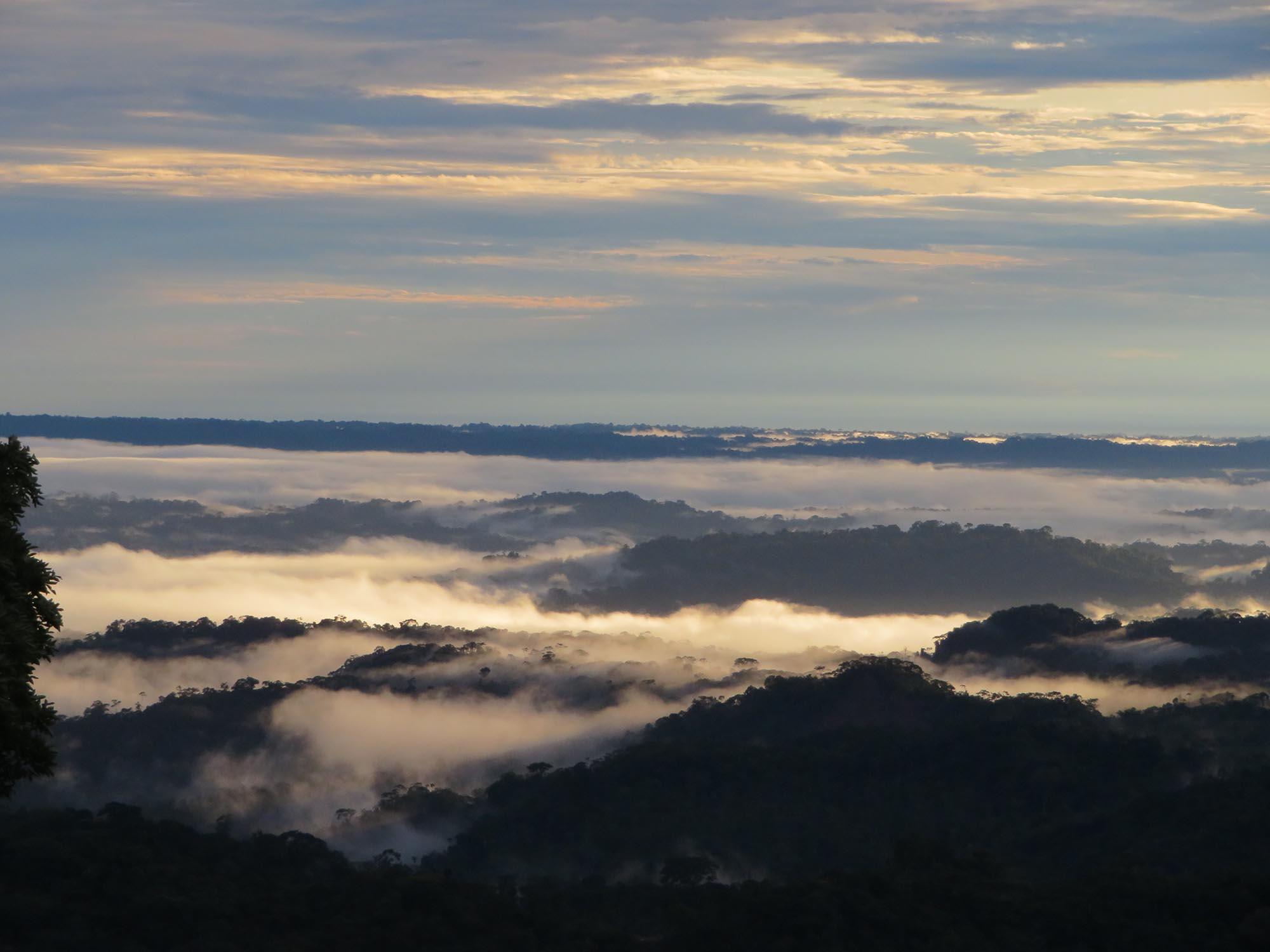 Amazon in Puyo, Ecuador, Blue Sky and Wine