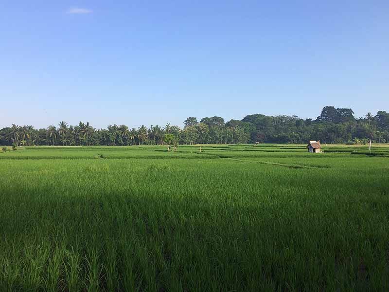ubud rice field bali indonisia, Blue Sky and Wine