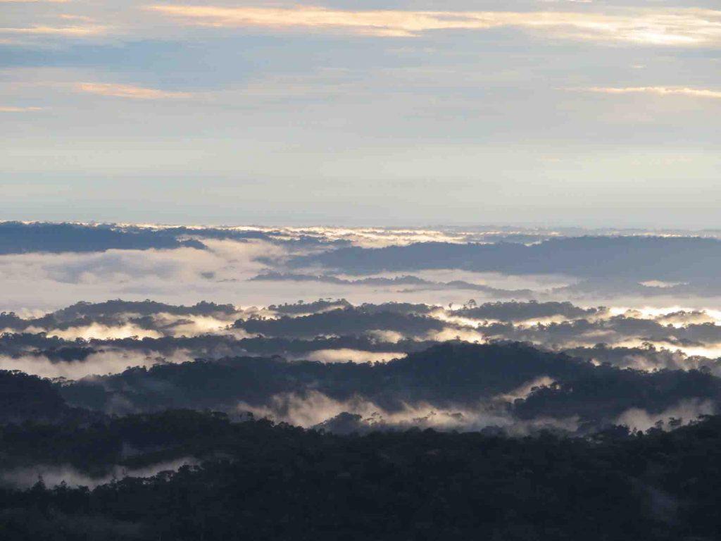 Puyo Amazon - Blue Sky and Wine Travel Blog