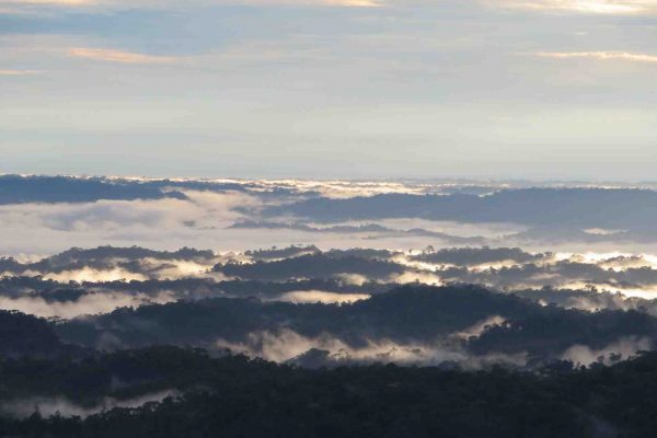 From Baños to Puyo, Immersing in the Ecuadorian Amazon Jungle